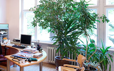 Staging Your Home to Sell? Don't Forget the Plants!